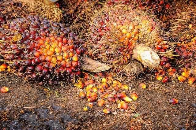 Pengumuman Hasil Seleksi Asisten Peneliti Project Red Palm Oil